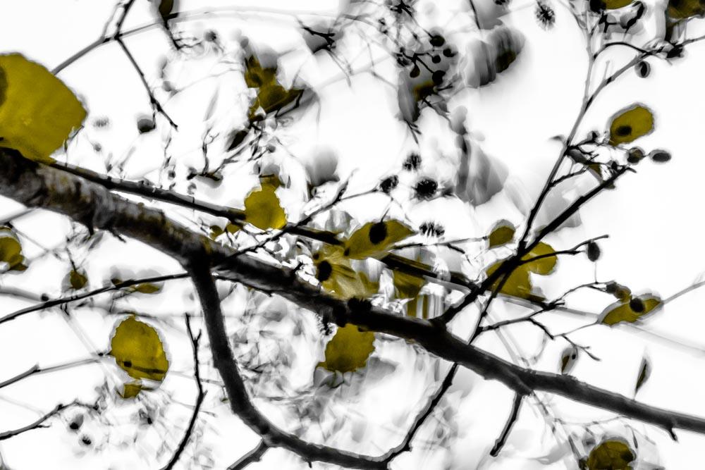 Windbäume